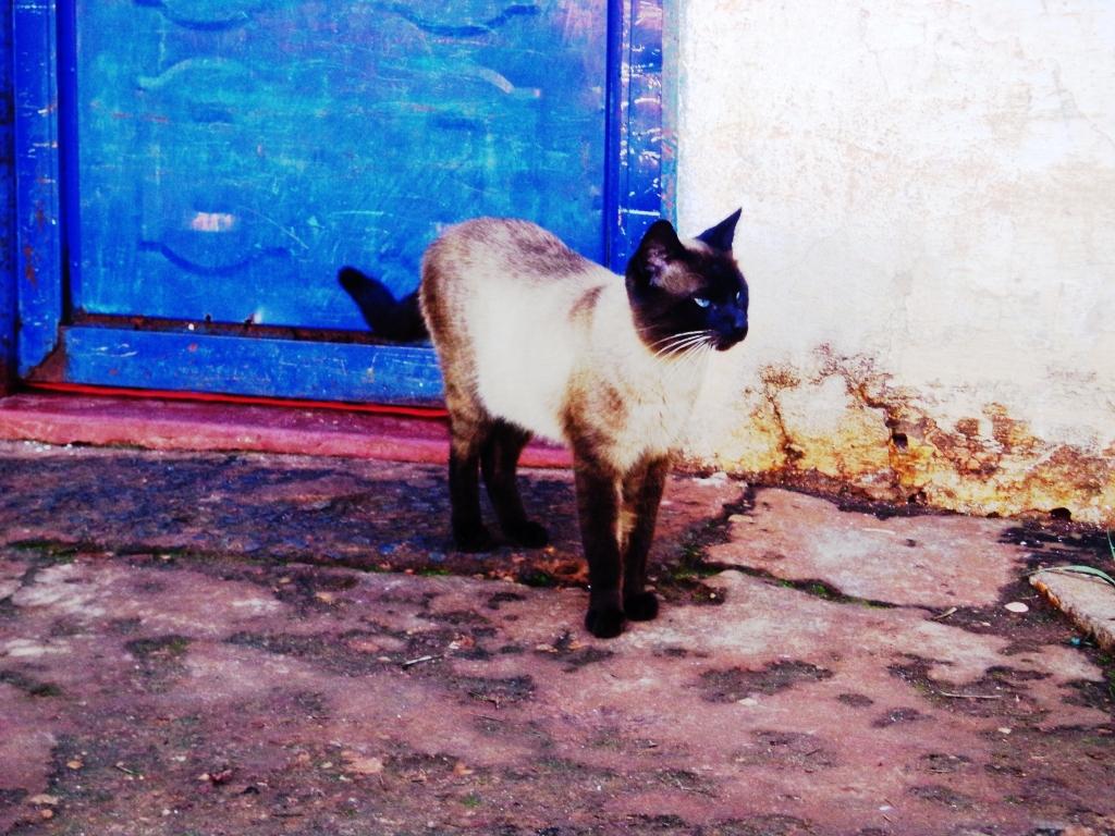 Gato no Estádio Municipal Pereira de Queiroz - Aparecida do Taboado - MS