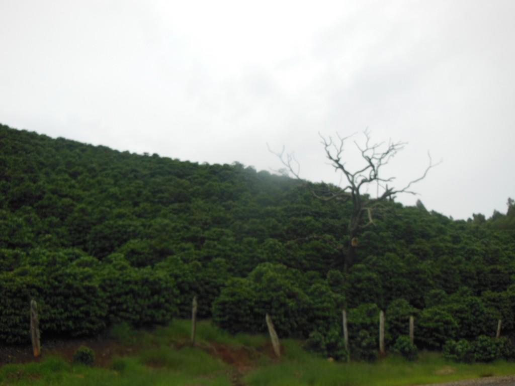 Azeitonas - Maria da Fé